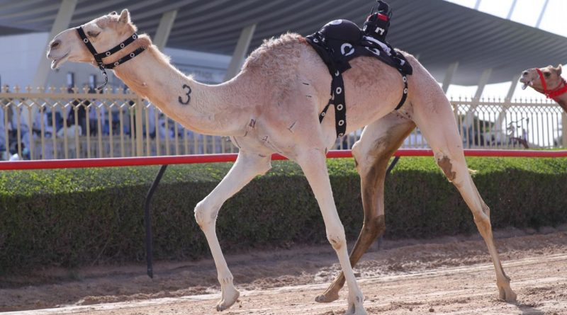مكتوم بن حمدان يشهد تحديات أصحاب السمو الشيوخ في مهرجان سمو ولي عهد دبي